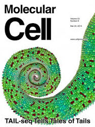 Professor Vic Narry KIM Selected as Cover Article for Molecular Cell
