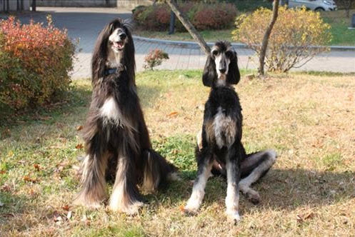 World's First Cloned Dog SNUPPY Shows Higher Genetic Concordance Rate than Twins